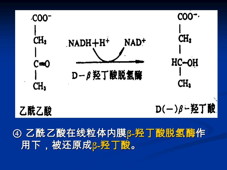 ④ 乙酰乙酸在线粒体内膜β-羟丁酸脱氢酶作用下,被还原成β-羟丁酸。