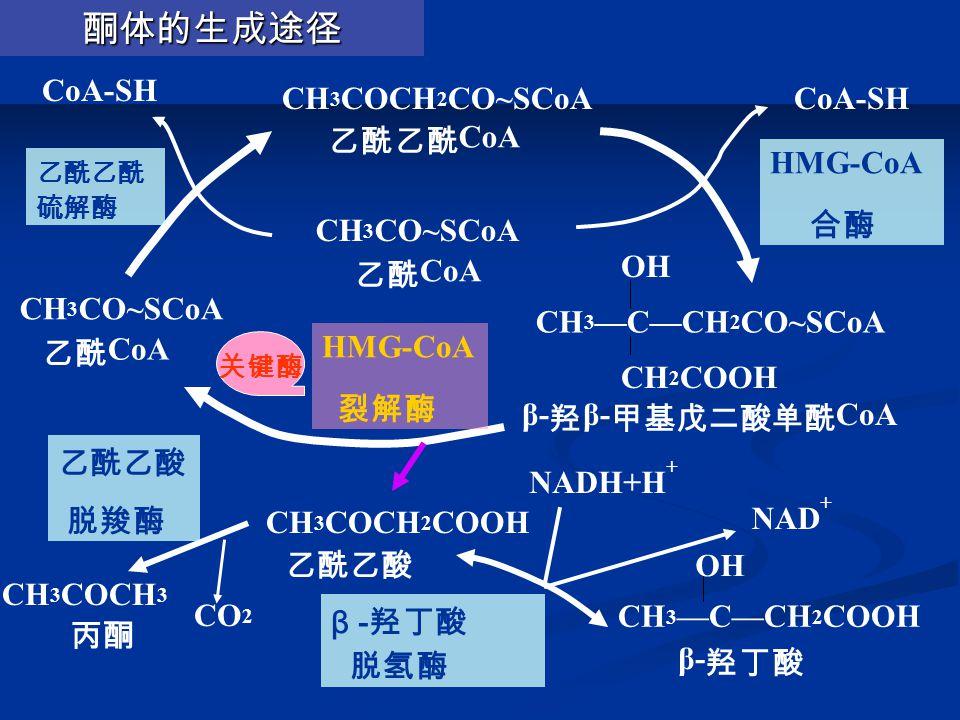 酮体的生成途径 CoA-SH CH3COCH2CO~SCoA 乙酰乙酰CoA CoA-SH HMG-CoA 合酶 CH3CO~SCoA