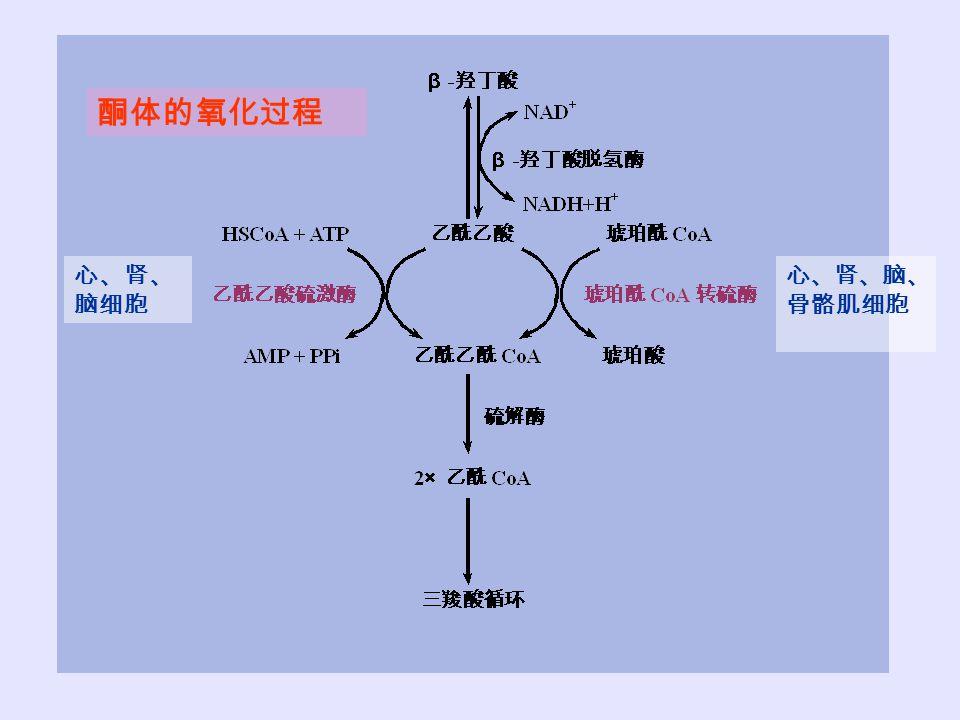 酮体的氧化过程 心、肾、脑细胞 心、肾、脑、骨骼肌细胞