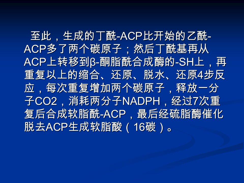 至此,生成的丁酰-ACP比开始的乙酰-ACP多了两个碳原子;然后丁酰基再从ACP上转移到β-酮脂酰合成酶的-SH上,再重复以上的缩合、还原、脱水、还原4步反应,每次重复增加两个碳原子,释放一分子CO2,消耗两分子NADPH,经过7次重复后合成软脂酰-ACP,最后经硫脂酶催化脱去ACP生成软脂酸(16碳)。