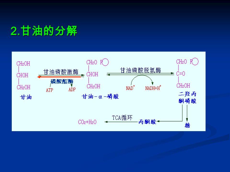 2.甘油的分解 磷酸酯酶
