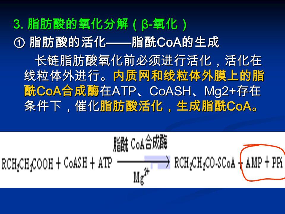 3. 脂肪酸的氧化分解(β-氧化) ① 脂肪酸的活化——脂酰CoA的生成.