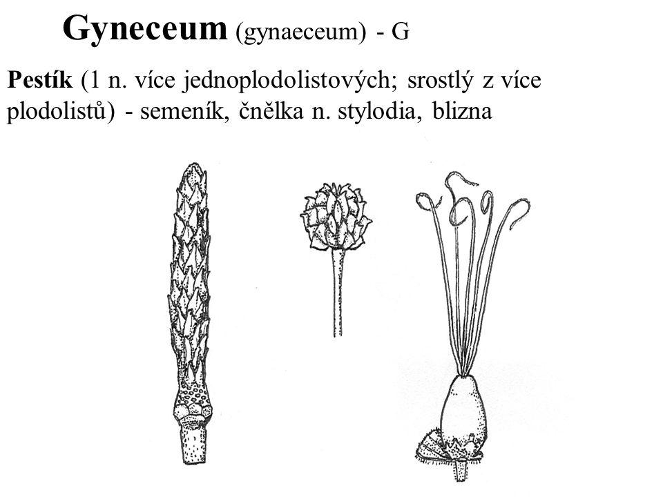 Gyneceum (gynaeceum) - G