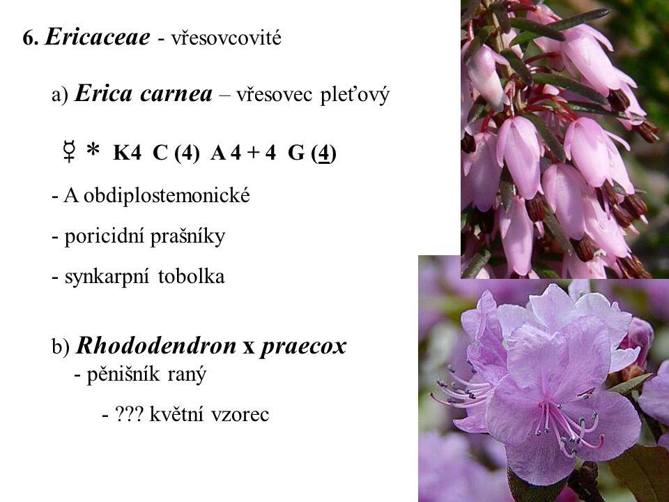  K4 C (4) A 4 + 4 G (4) 6. Ericaceae - vřesovcovité