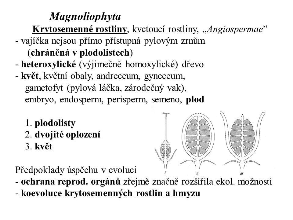 "Magnoliophyta Krytosemenné rostliny, kvetoucí rostliny, ""Angiospermae"