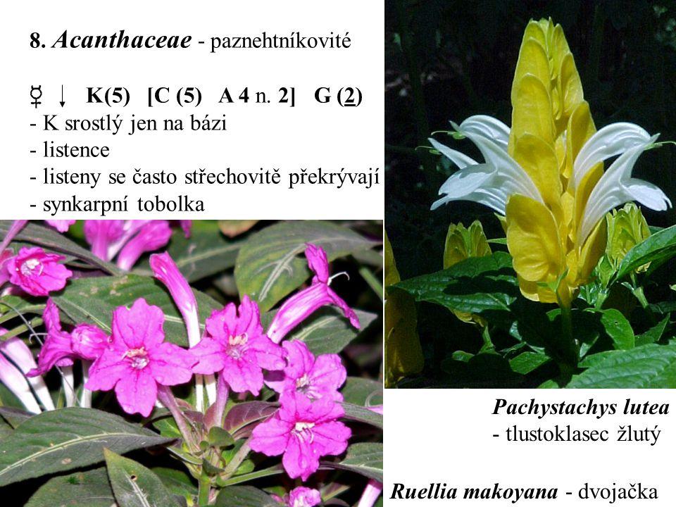 8. Acanthaceae - paznehtníkovité
