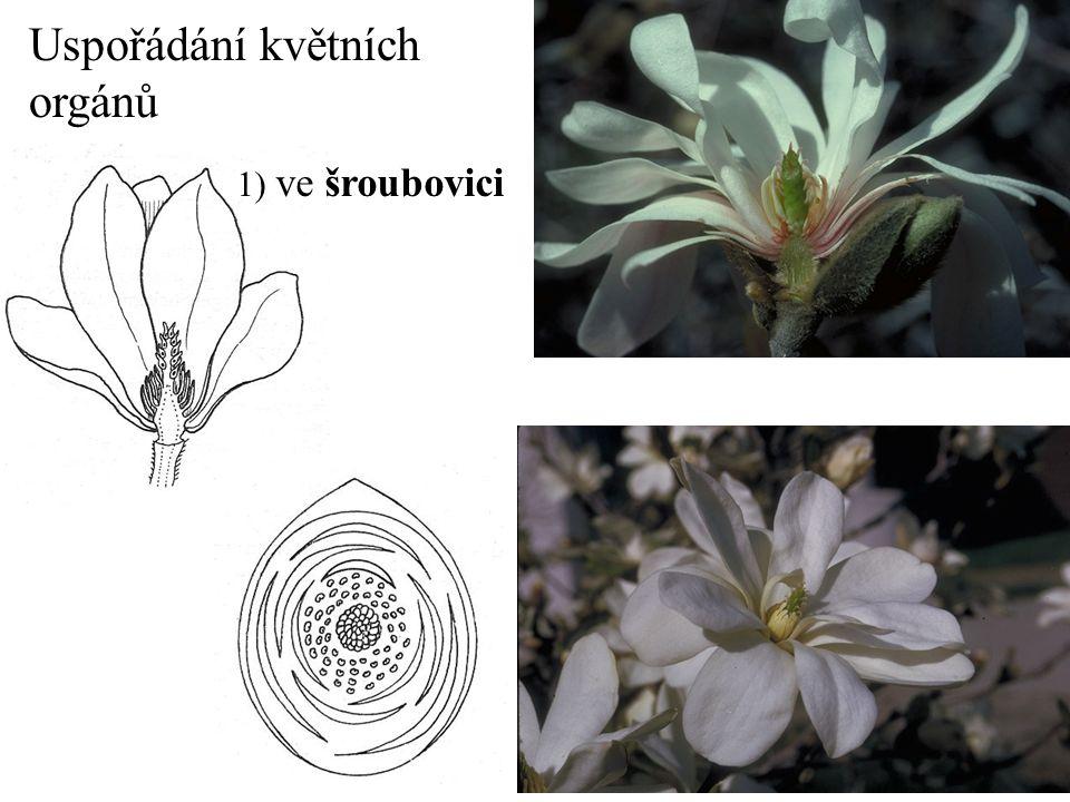 Uspořádání květních orgánů 1) ve šroubovici