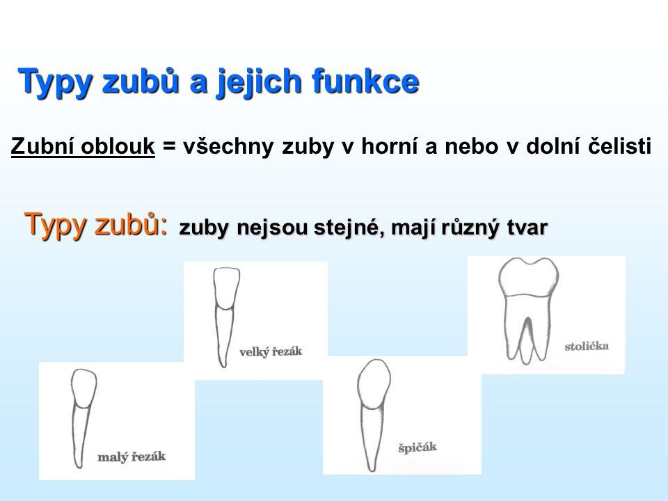 Typy zubů a jejich funkce