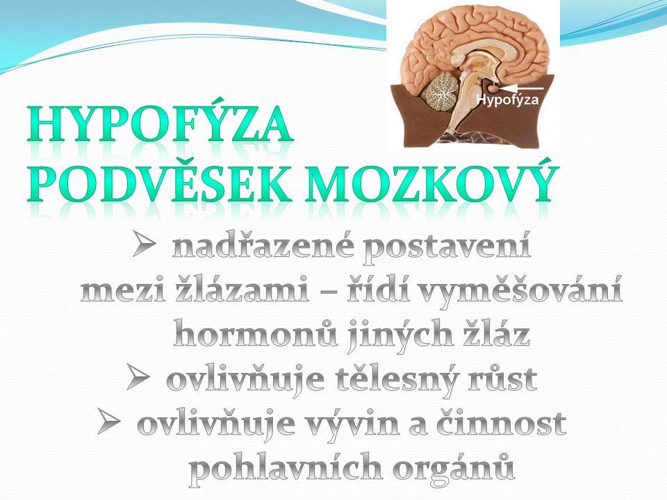 Hypofýza podvěsek mozkový
