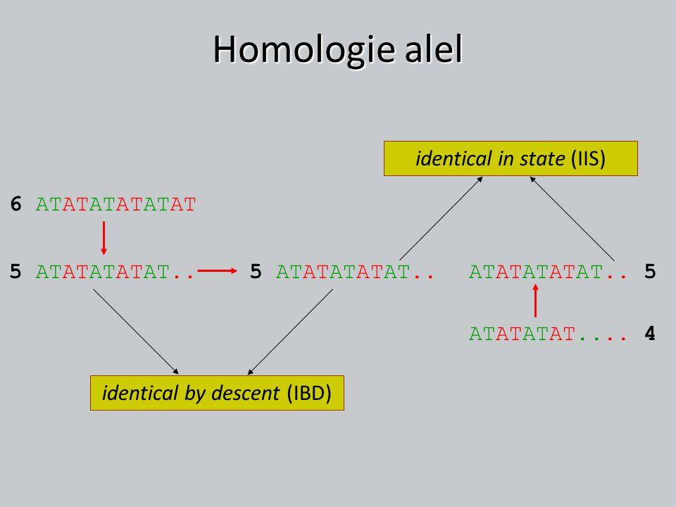 Homologie alel identical in state (IIS) 6 ATATATATATAT 5 ATATATATAT..