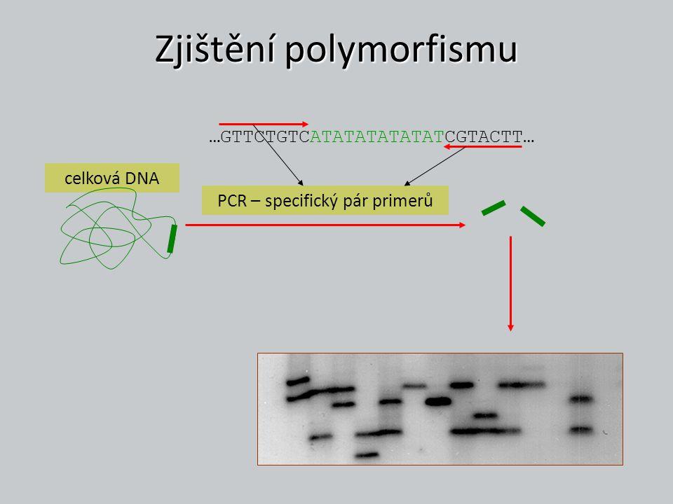 Zjištění polymorfismu