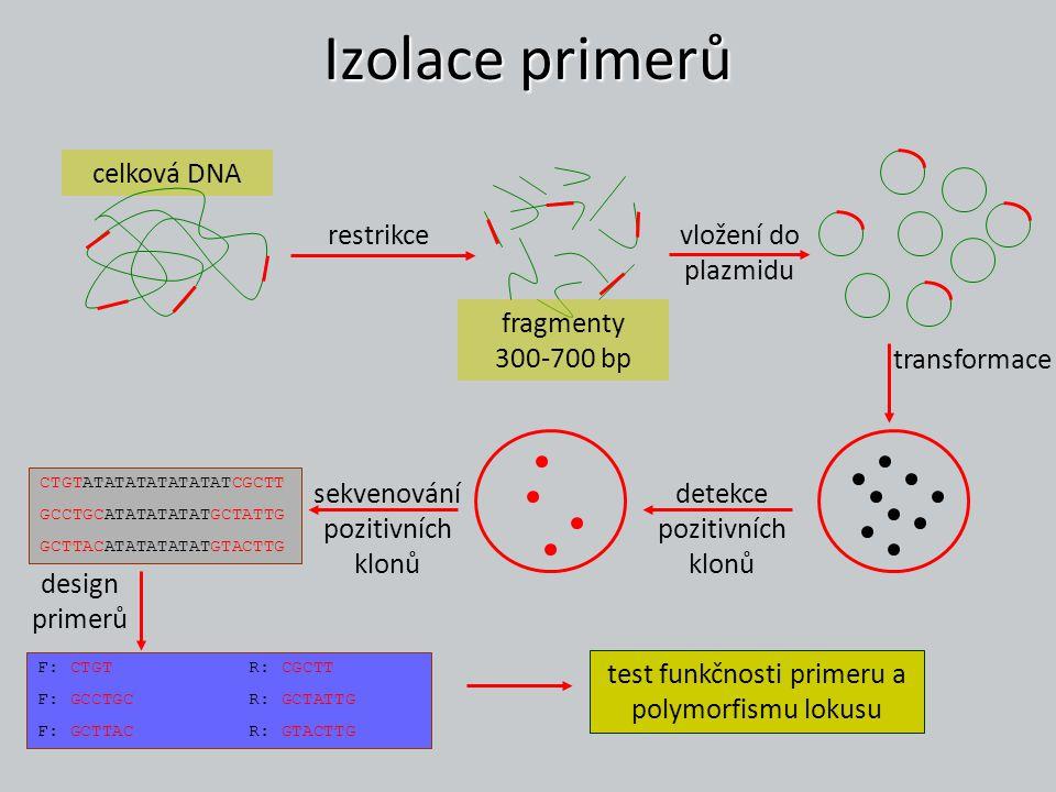 Izolace primerů celková DNA vložení do plazmidu restrikce