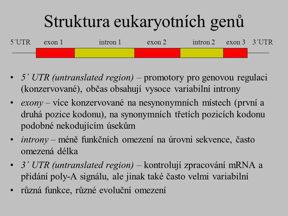 Struktura eukaryotních genů