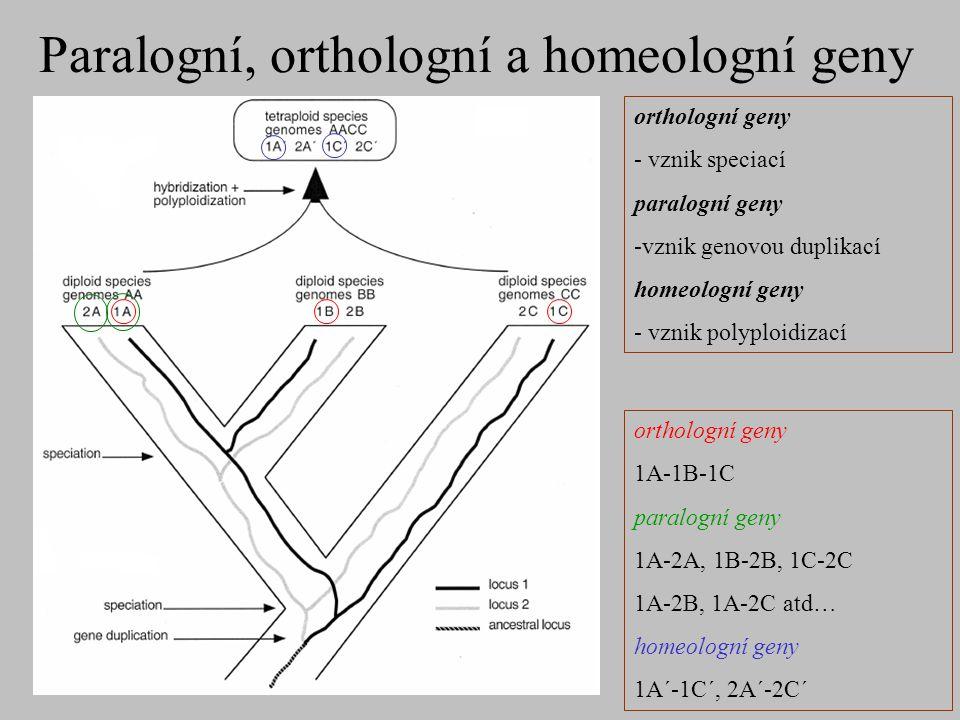 Paralogní, orthologní a homeologní geny