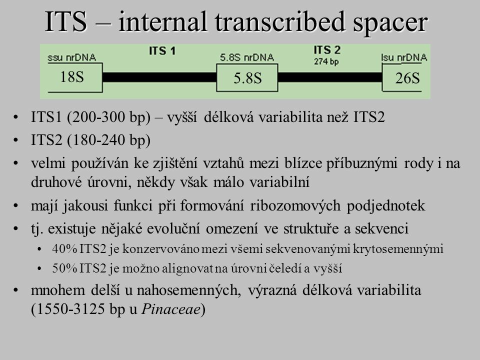 ITS – internal transcribed spacer