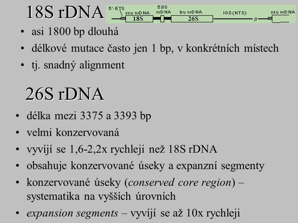 18S rDNA 26S rDNA asi 1800 bp dlouhá