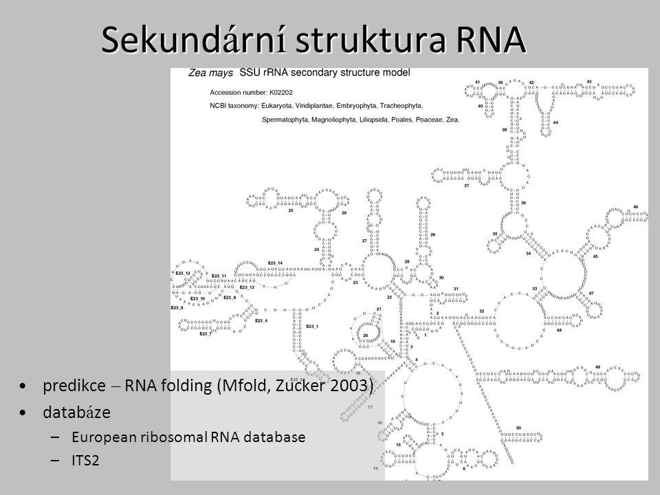 Sekundární struktura RNA