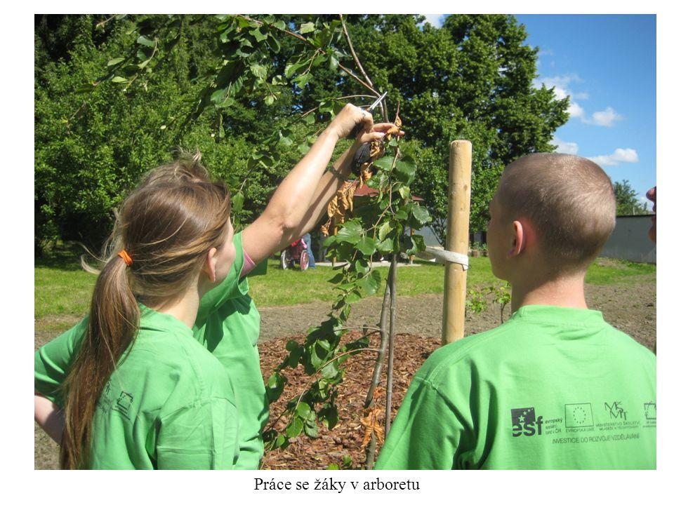 Práce se žáky v arboretu