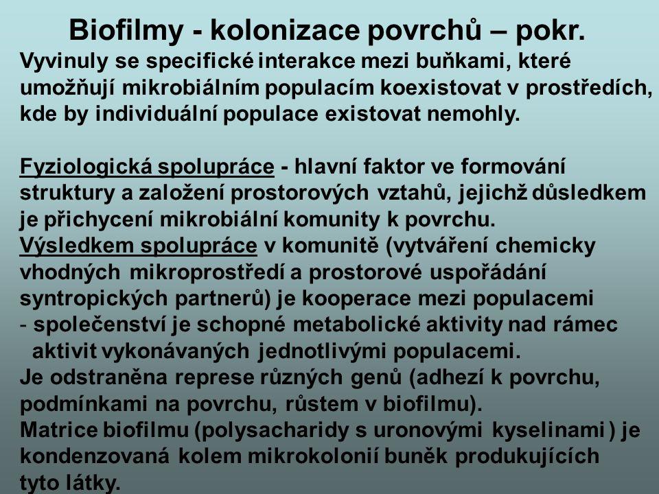 Biofilmy - kolonizace povrchů – pokr.