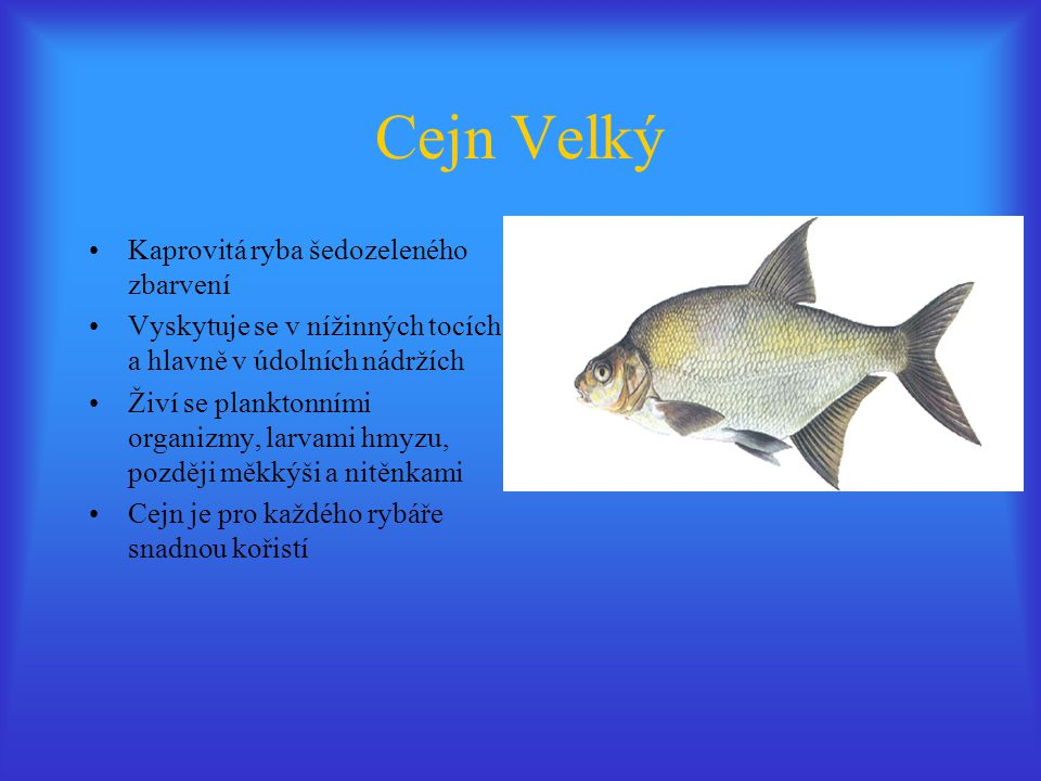 Cejn Velký Kaprovitá ryba šedozeleného zbarvení