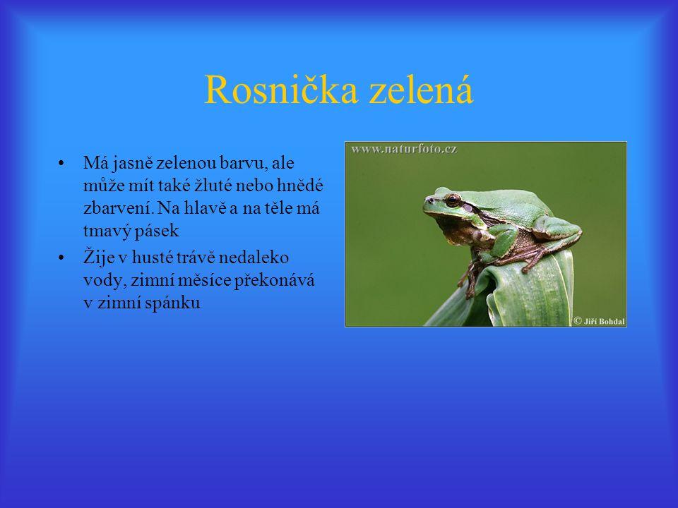Rosnička zelená Má jasně zelenou barvu, ale může mít také žluté nebo hnědé zbarvení. Na hlavě a na těle má tmavý pásek.