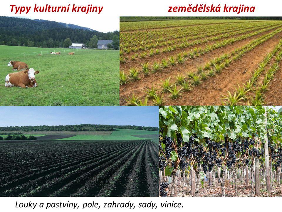 Typy kulturní krajiny zemědělská krajina