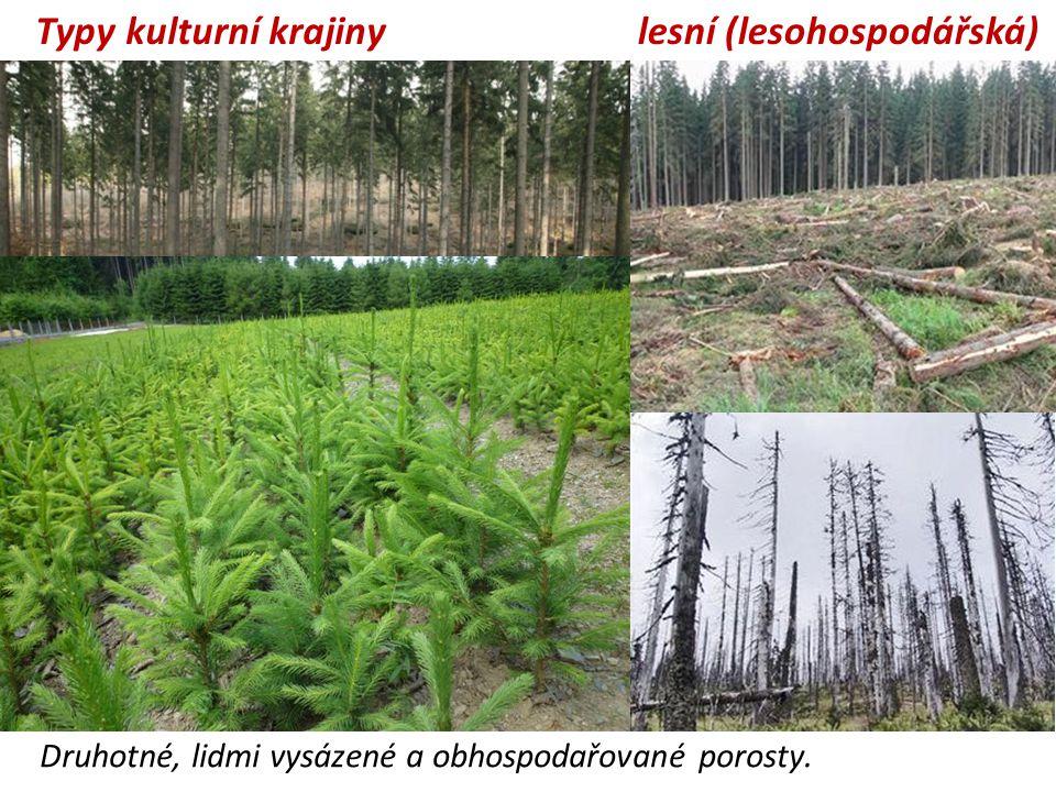 lesní (lesohospodářská)