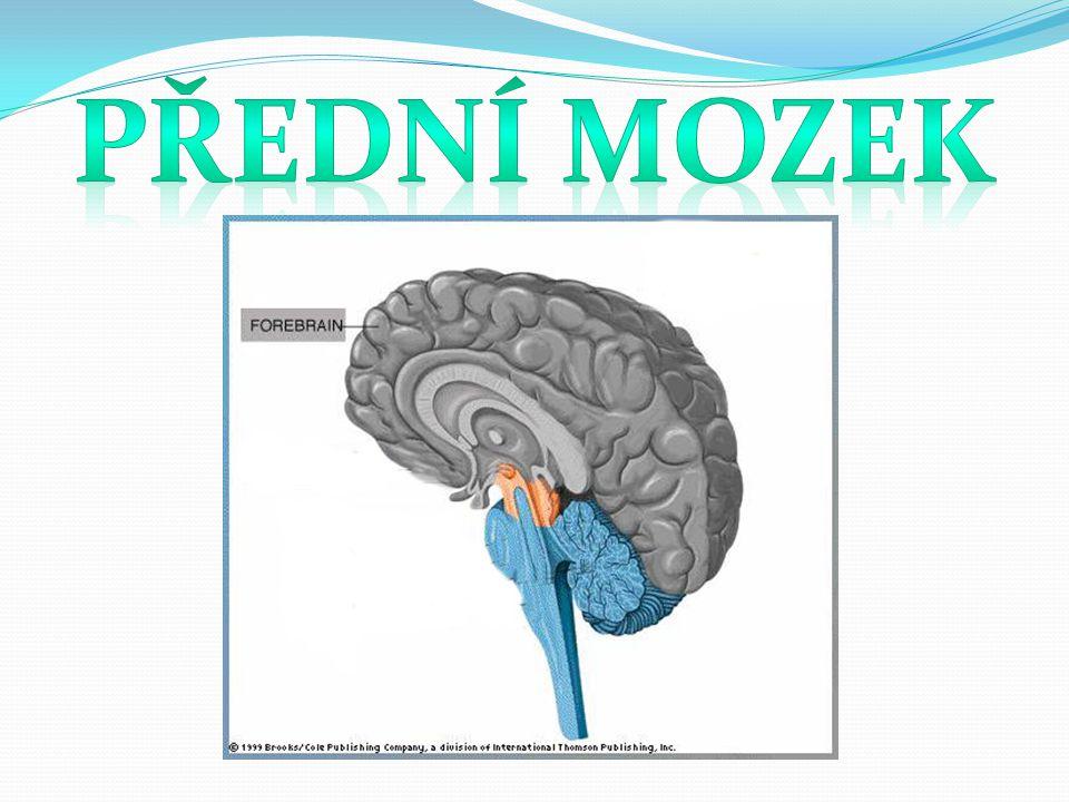 Přední mozek