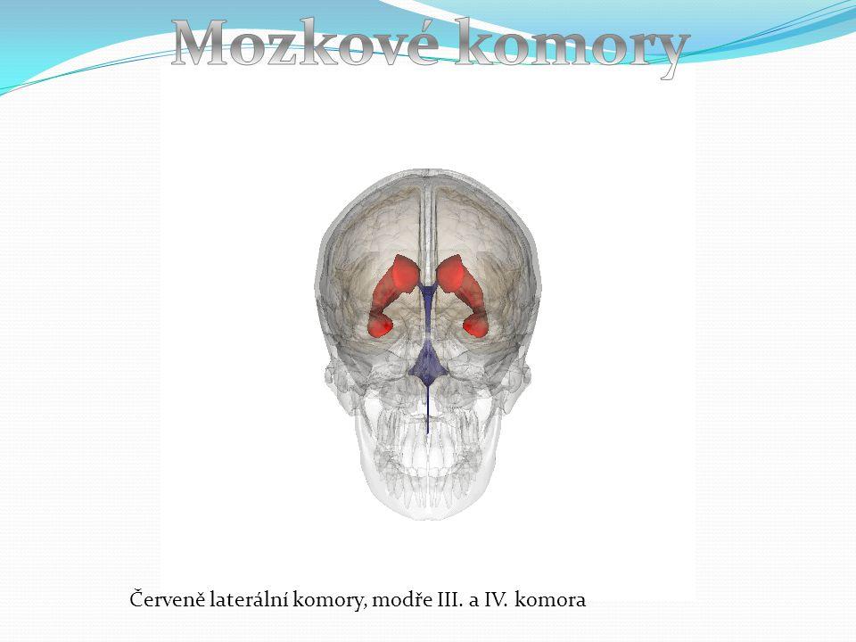 Mozkové komory Červeně laterální komory, modře III. a IV. komora