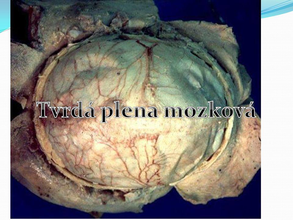 Tvrdá plena mozková