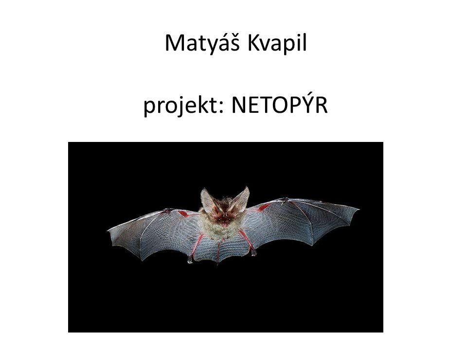 Matyáš Kvapil projekt: NETOPÝR