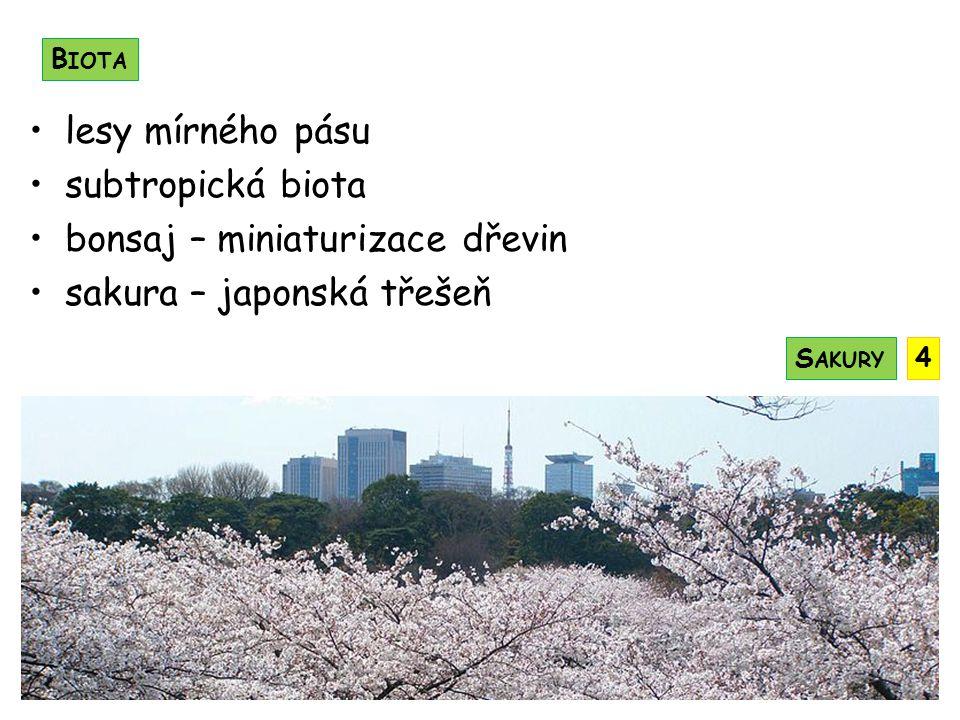 bonsaj – miniaturizace dřevin sakura – japonská třešeň
