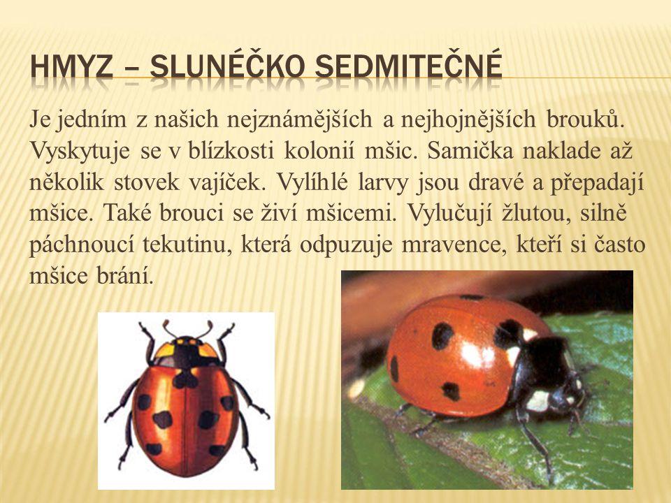 Hmyz – slunéčko sedmitečné