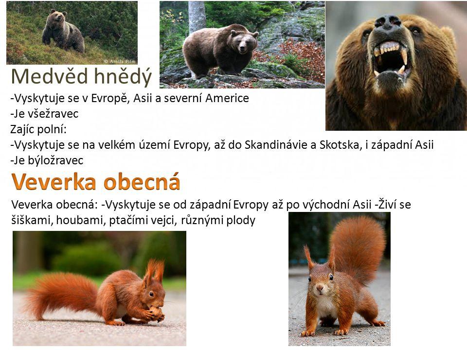 Medvěd hnědý -Vyskytuje se v Evropě, Asii a severní Americe -Je všežravec