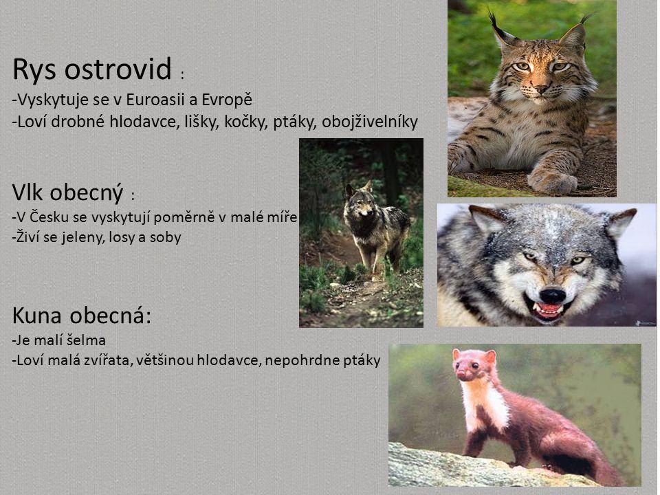 Rys ostrovid : -Vyskytuje se v Euroasii a Evropě -Loví drobné hlodavce, lišky, kočky, ptáky, obojživelníky