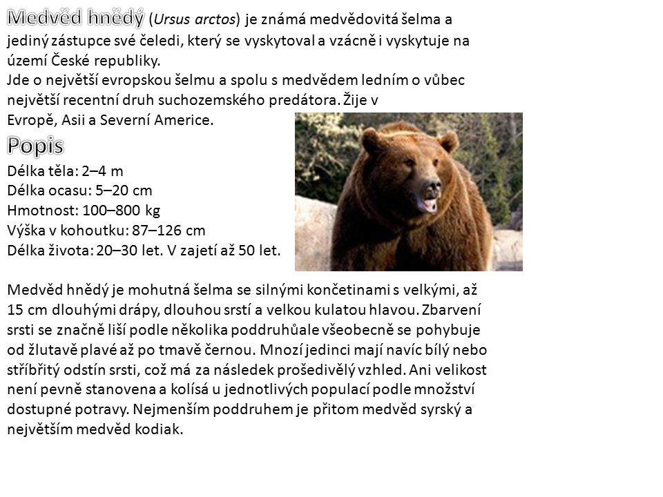 Medvěd hnědý (Ursus arctos) je známá medvědovitá šelma a jediný zástupce své čeledi, který se vyskytoval a vzácně i vyskytuje na území České republiky.