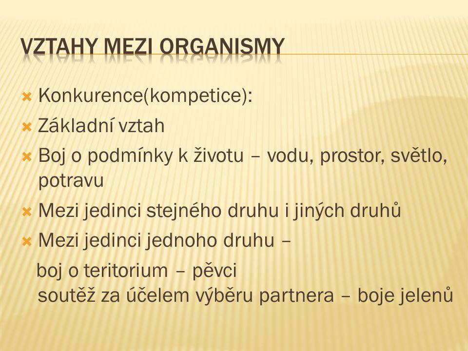 Vztahy mezi organismy Konkurence(kompetice): Základní vztah