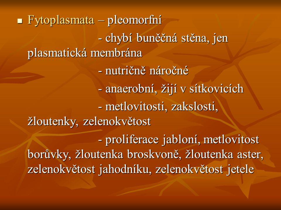 Fytoplasmata – pleomorfní