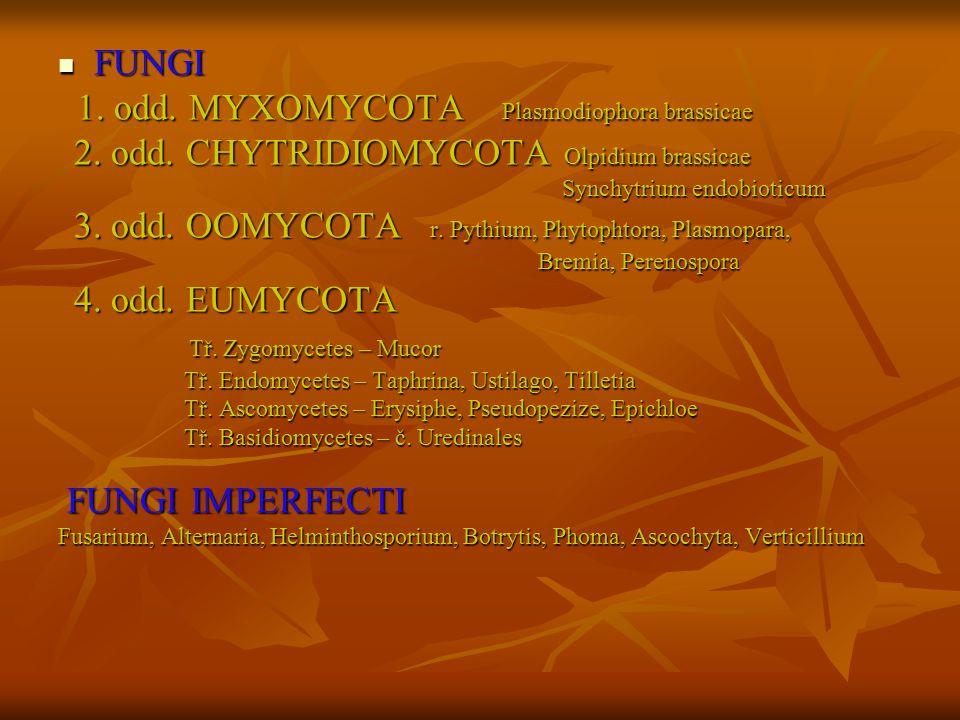 1. odd. MYXOMYCOTA Plasmodiophora brassicae