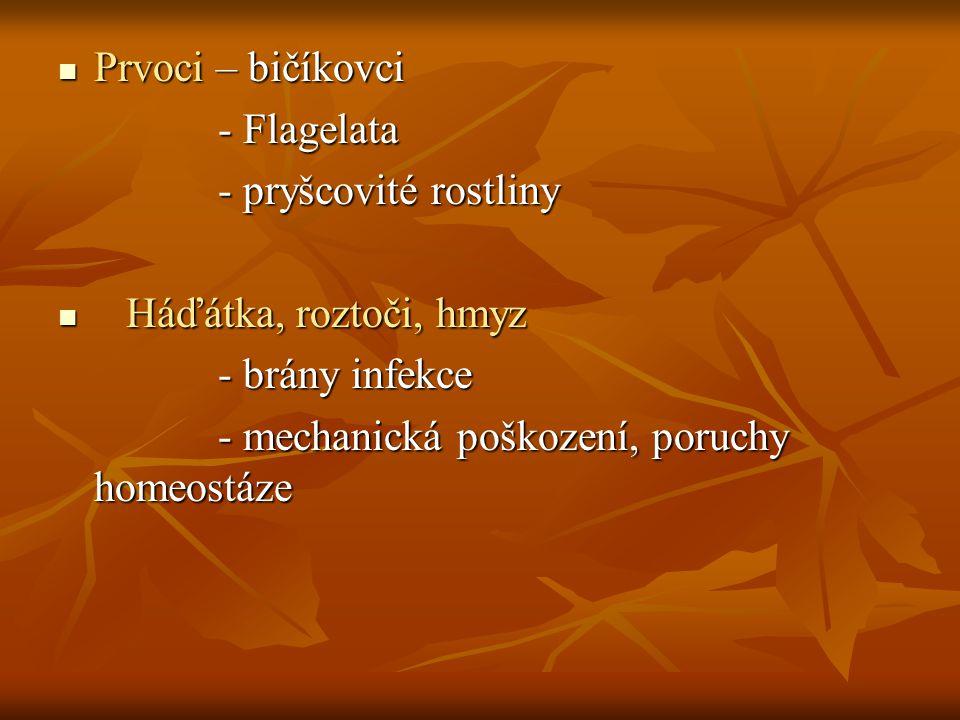 Prvoci – bičíkovci - Flagelata. - pryšcovité rostliny.