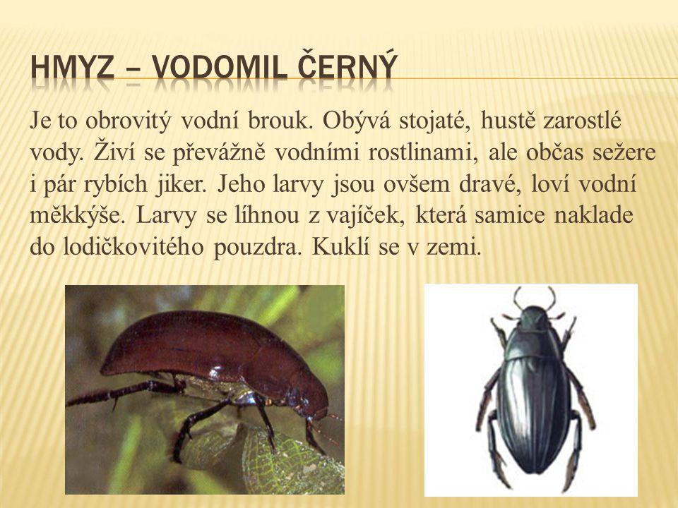 Hmyz – vodomil černý