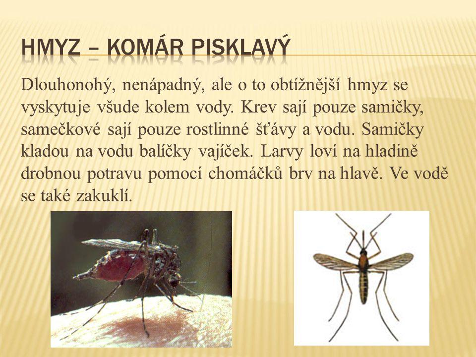 Hmyz – komár pisklavý
