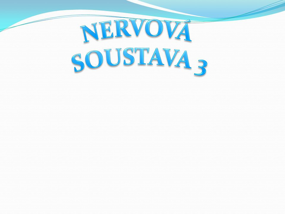NERVOVÁ SOUSTAVA 3