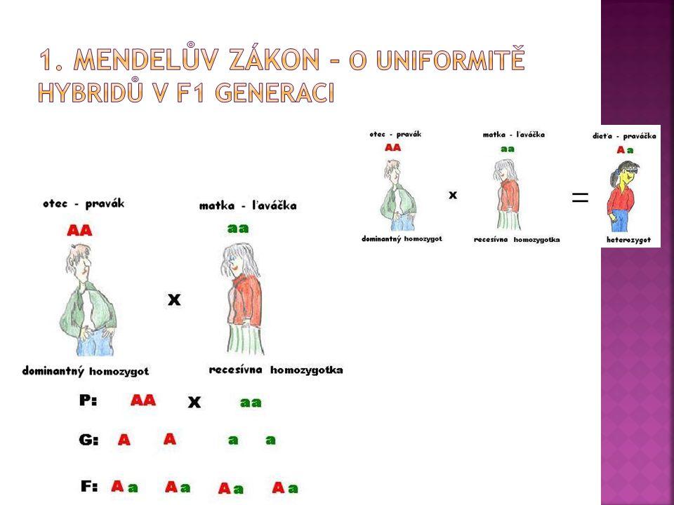 1. Mendelův zákon – o uniformitě hybridů v f1 generaci