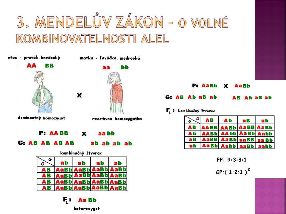 3. Mendelův zákon - O volné kombinovatelnosti alel