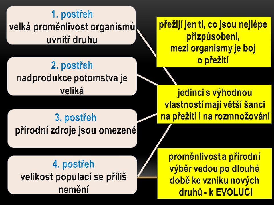 1. postřeh velká proměnlivost organismů uvnitř druhu