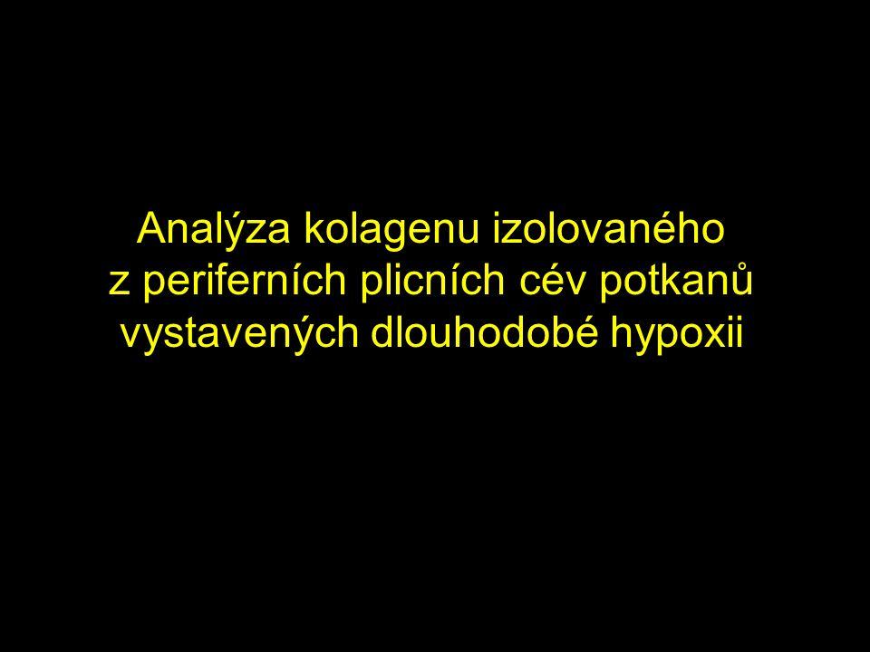 Analýza kolagenu izolovaného z periferních plicních cév potkanů vystavených dlouhodobé hypoxii