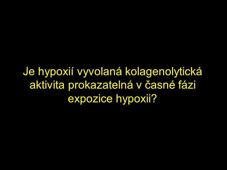 Je hypoxií vyvolaná kolagenolytická aktivita prokazatelná v časné fázi expozice hypoxii
