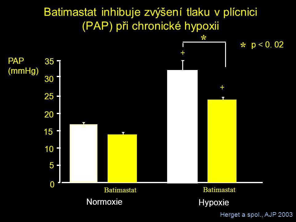Batimastat inhibuje zvýšení tlaku v plícnici (PAP) při chronické hypoxii