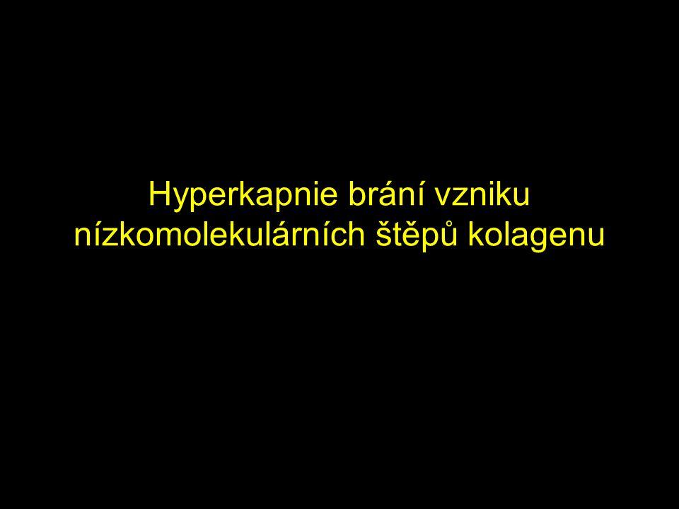 Hyperkapnie brání vzniku nízkomolekulárních štěpů kolagenu